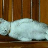 ばか猫ちゃん-4