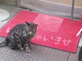 今日は街にネコが多し。