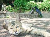 cat_crow.jpg