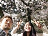 桜の木になろう。